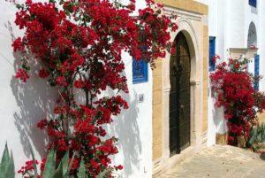 Uno scorcio caratteristico della Tunisia
