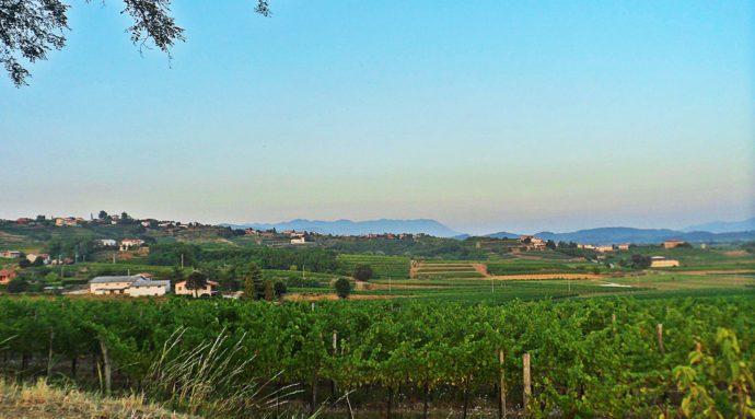Friuli Venezia Giulia: il bello della vendemmia 2016