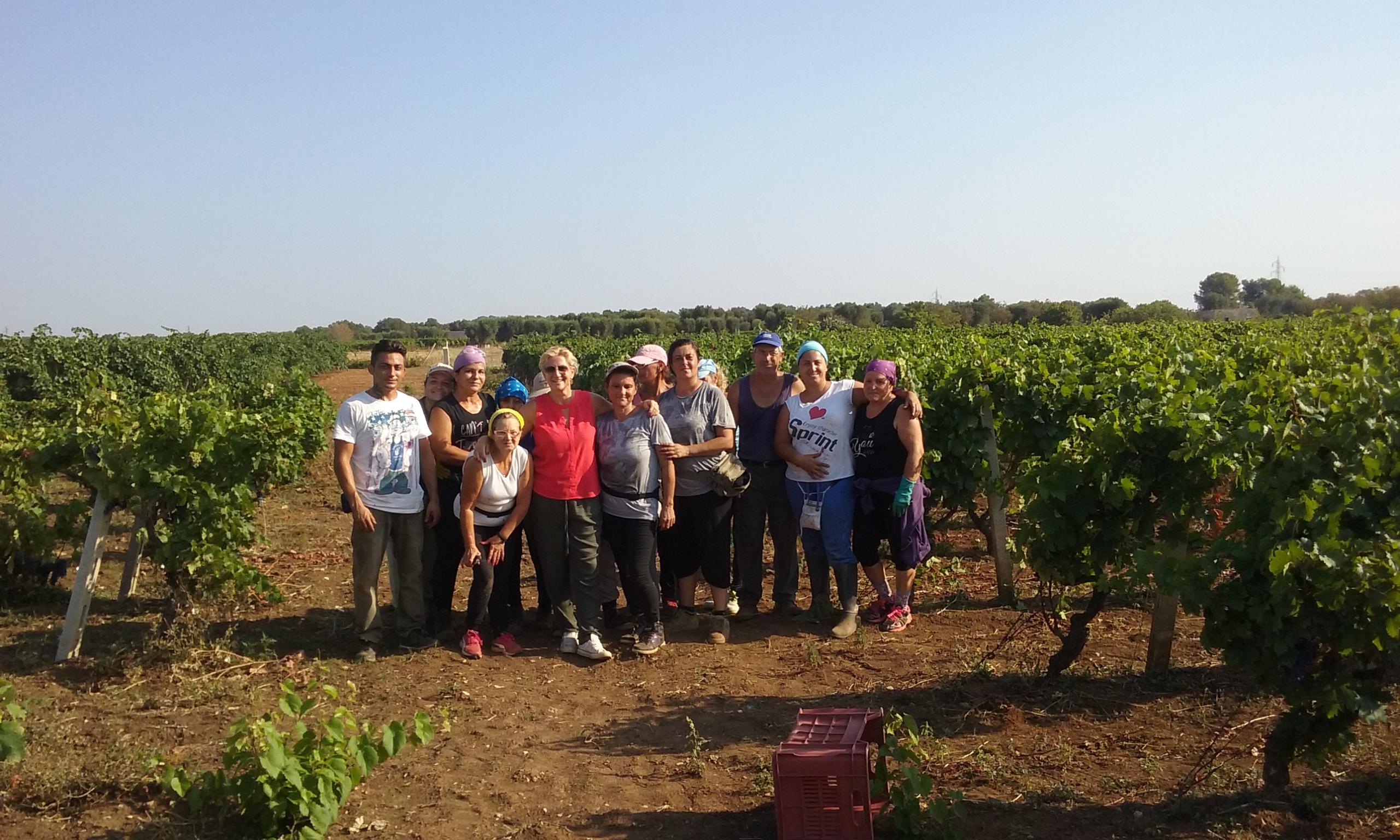 La vendemmia 2016 in Puglia: da Lecce a Bari a Foggia