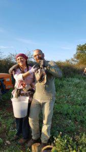 Vendemmia 2016 in Puglia da Flora Saponari