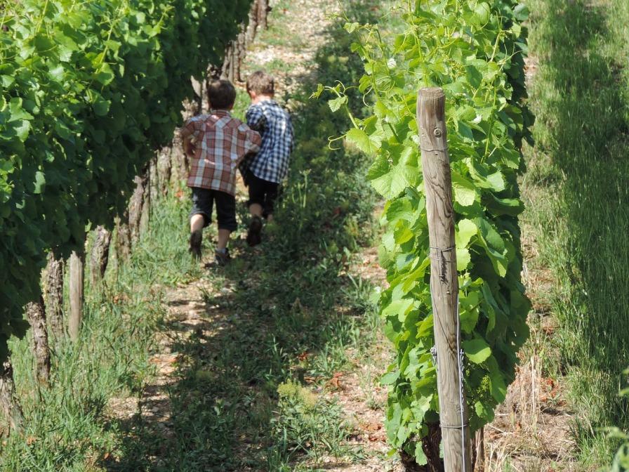 Sostenibilità del vino: il punto di vista del consumatore