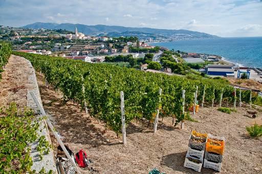 I vini della Liguria: 4 vini per 4 vignaiole