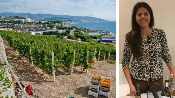 I vini della Liguria: Vermentino