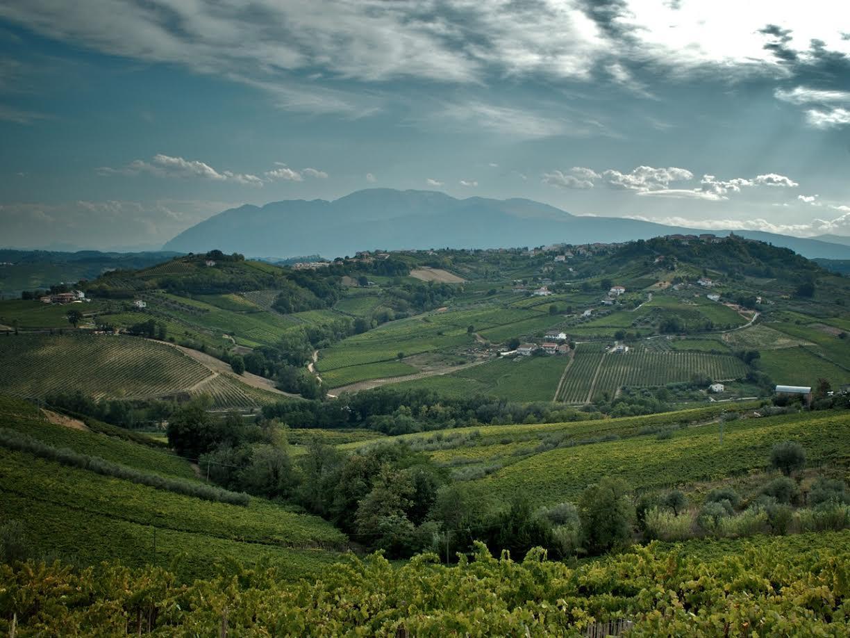 4 donne e un grande vino: il Montepulciano d'Abruzzo