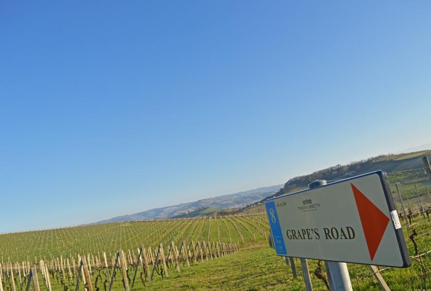 Grape's Road alla Tenuta Carretta