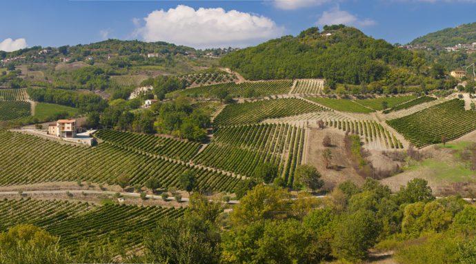 Fiano e Asprinio, vitigni autoctoni della Campania