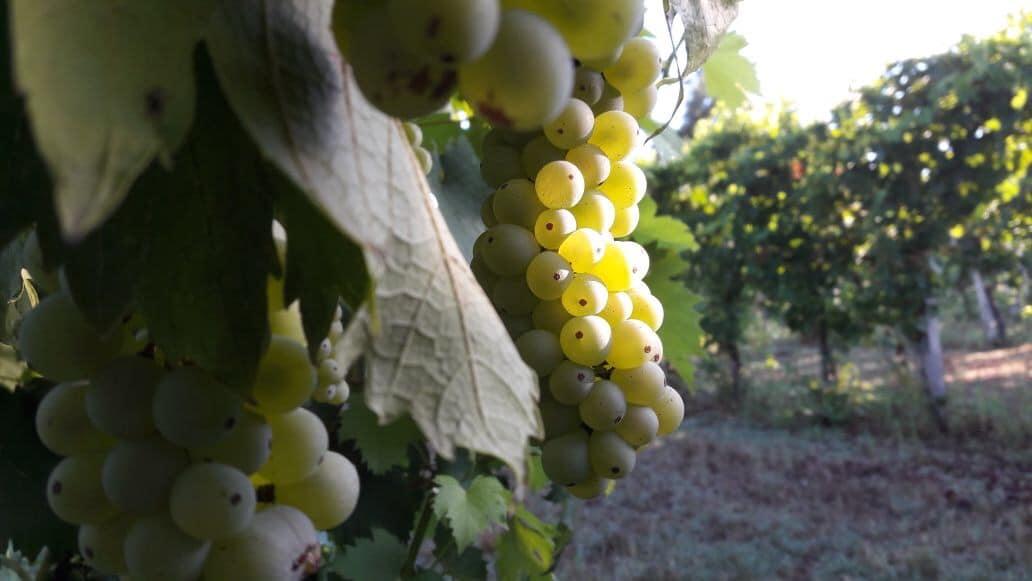 Tre Sommelier dell'Emilia Romagna si raccontano