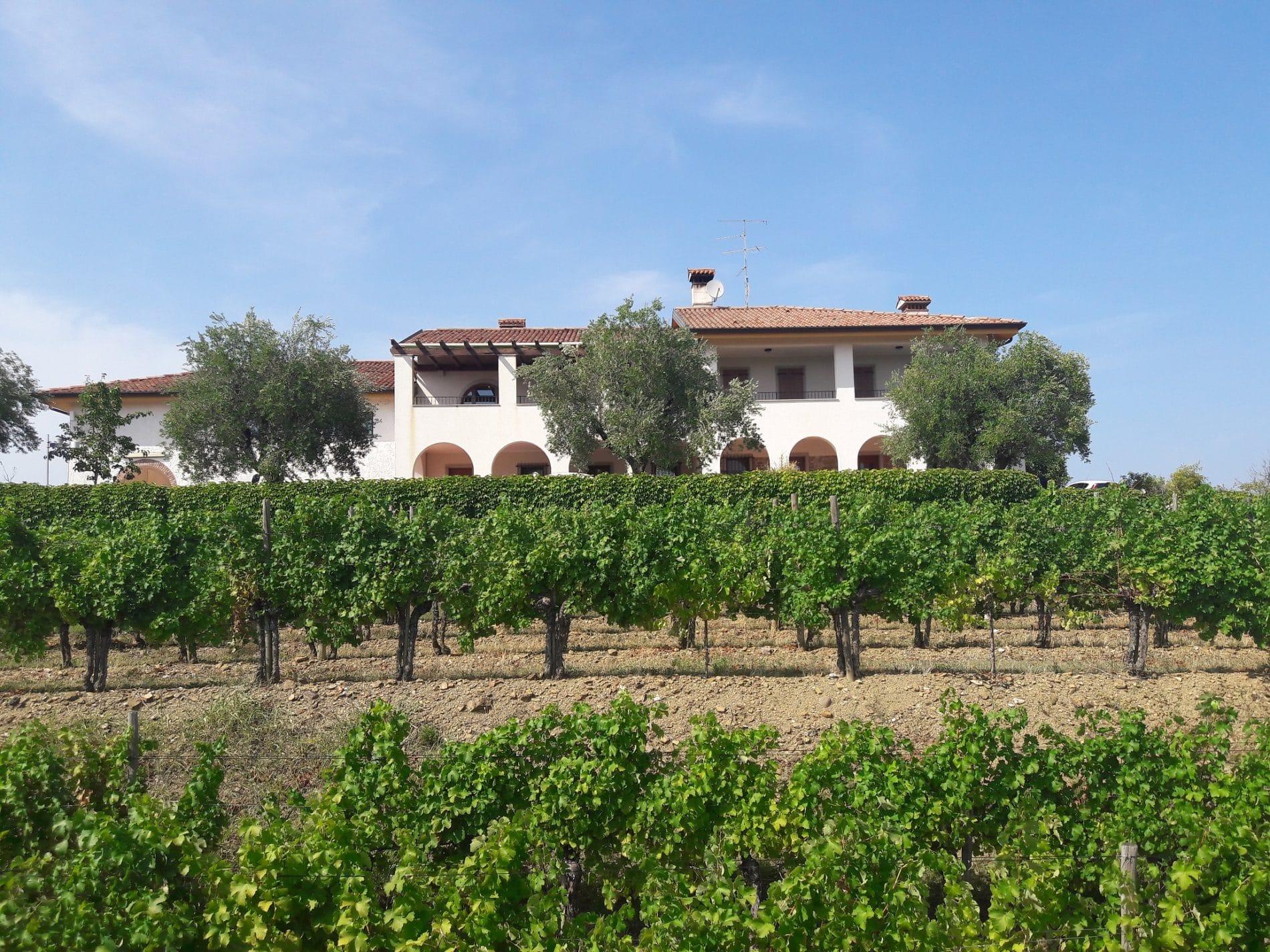 Pignolo, vitigno autoctono del Friuli Venezia Giulia