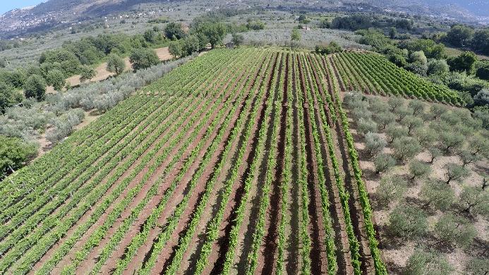 Cesanese del piglio, vino autoctono del Lazio