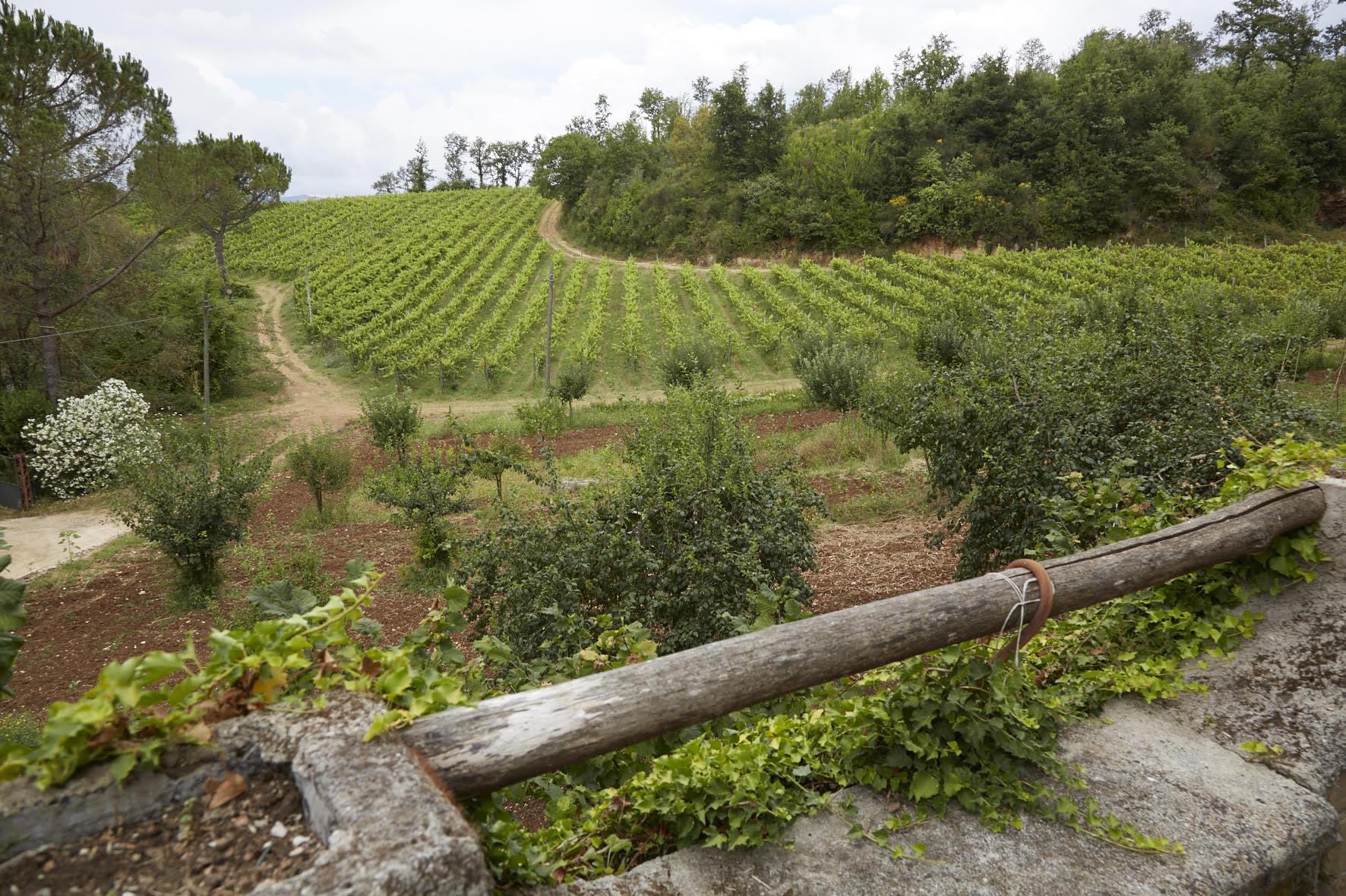 """Vini del Lazio: il Cesanese di """"Ciociaria"""""""