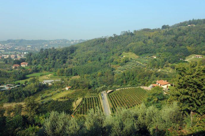 Lombardia: il taglio bordolese