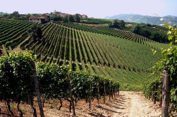 Barolo, un grande vino del Piemonte
