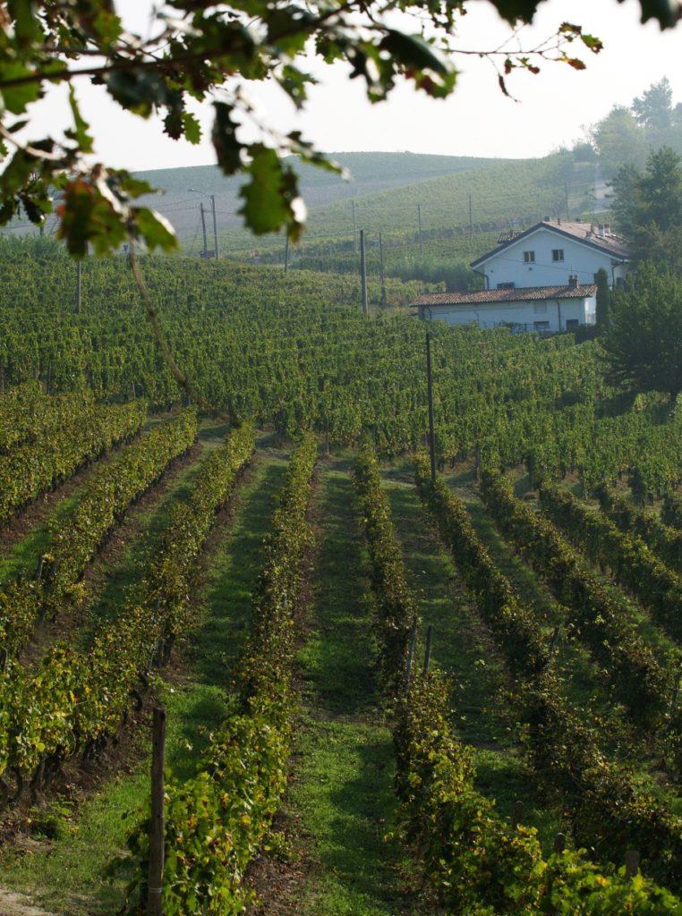 Piemonte: Diana Bracco de Silva racconta il Nizza